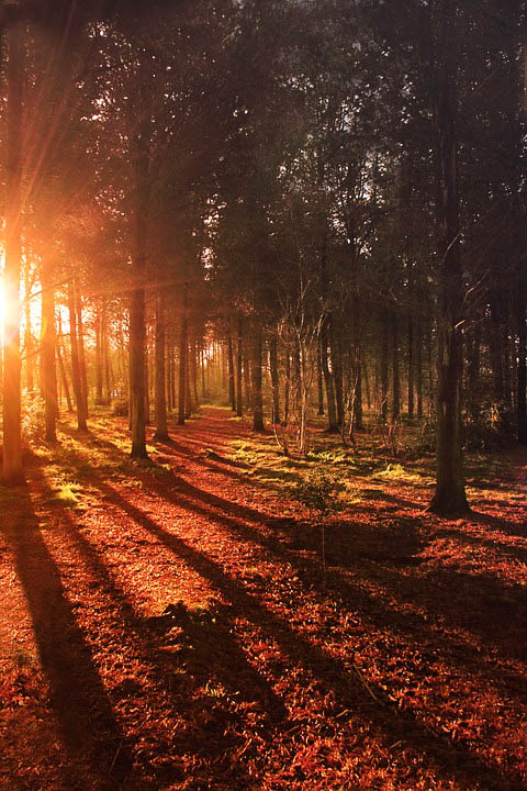 forest-843582_960_720