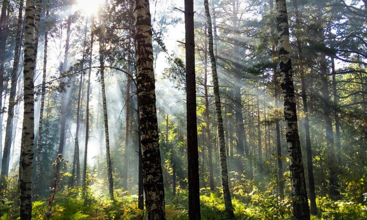 forest-989065_960_720